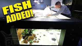 I ADDED THE FISH TO THE 2,000G AQUARIUM!!
