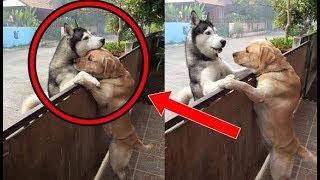 قصة  كلب قام بشيء غير متوقع صدم الجميع  l شاهد المفاجأة