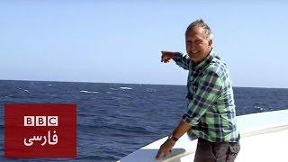 وقتى كه: يک نهنگ آبى خبرنگار بىبىسى را غافلگير كرد