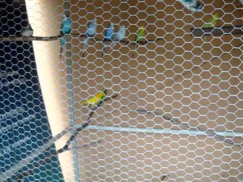 Viveiro de Pássaros Parte 4