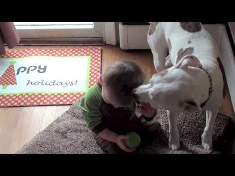 This is what a vicious PITBULL can do to a BABY Jameson the Vicious Pitbull