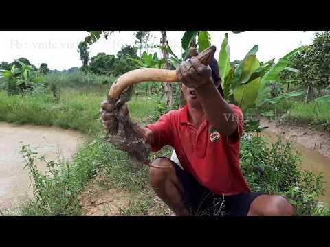 mancing belut besar di kalimantan timur