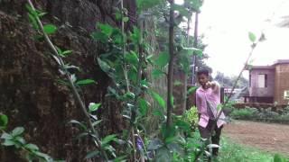 Matthe Maleyagide - Chakravarti