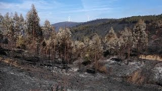 Scorched aftermath of deadly Portuguese widlfires