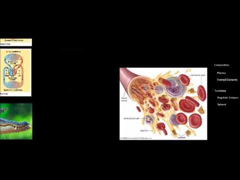 Xxx Mp4 AP Biology Circulatory System Lesson 3gp Sex