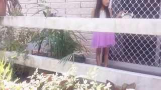 Lily's secret admirer 🙈|| purnima & kiran