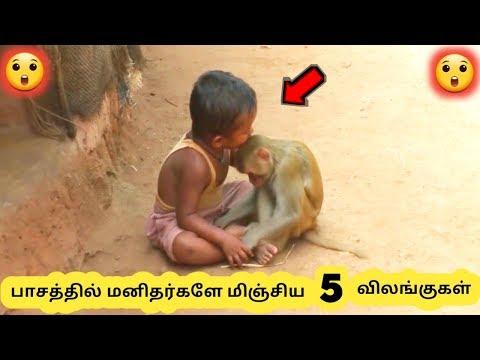 விலங்குகளின் பாசம் Five Animal Love Stories Tamil Galatta News
