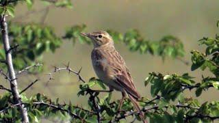 Ornitologija, Ptice I Staništa, Posmatranje Ptica (Darko Saveljić)