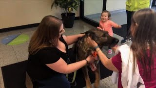 German Shepherd Reunites With Family After United Flies Him to Japan by Mistake