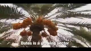 PAKISTANI DATE FRUIT CULTIVATION DATES OF PAKISTAN
