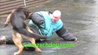 """""""Ace Of Hearts"""" Movie Star K9 Solo And Dino Playing"""