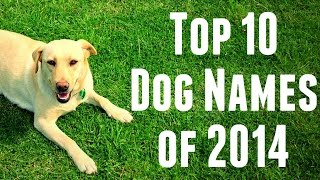 Top 10 Dog Names of 2014