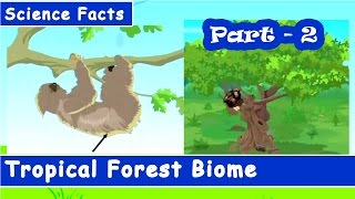 Tropical Forest of world | Kids General Knowledge | Part-2