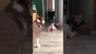 Baby and dog in play