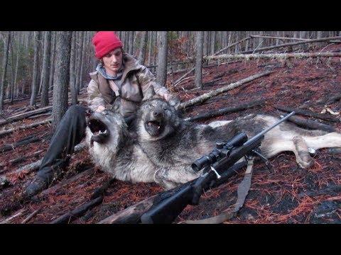 Xxx Mp4 2018 North Idaho Wolf Hunting Brandon Pitcher 3gp Sex