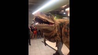 Hilarious dinosaur prank in Groupon's office