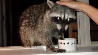 Fred the Friendly Raccoon - Part 7