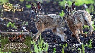 Hare hunting in Backa Palanka  - Lov na zeca - Chasse au lièvre