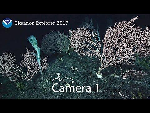 Camera 1: Exploring Remote Pacific MPAs