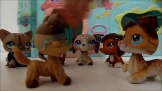 Lps Super Hero Chronicles Episode #7 Another New Girl, Something's Up)