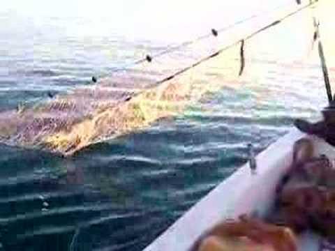 antalya limanında ağ avı