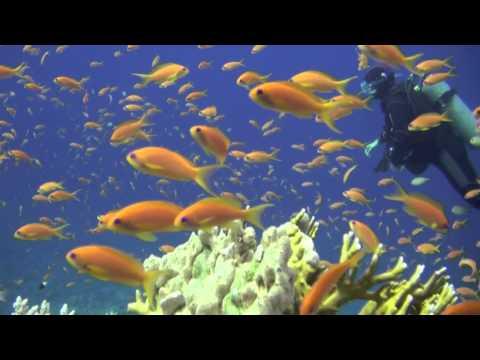 Buceo en el Mar Rojo Norte Arrecifes Por Juan Nistal