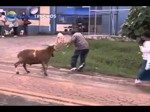 Cabra Loca Aterroriza Brazil