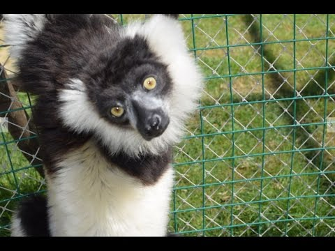 Darıca Hayvanat Bahçesi (Özel Çekim) Faruk Yalçın Zoo | Gezilmesi Gereken Yerler