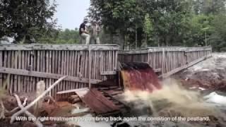 Sebangau National Park - Indonesia
