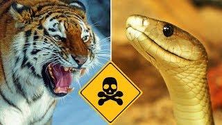 Top 10 Most Dangerous Predators On Earth - Part 1 Vlog#21 by HooplakidzLab