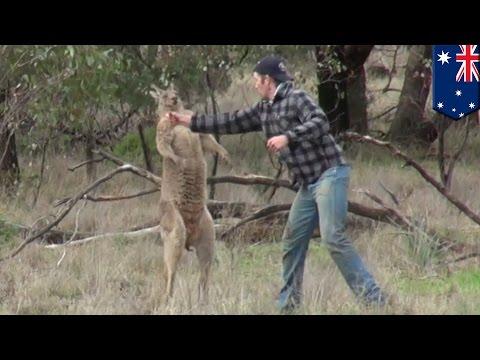 Man fights kangaroo: Aussie dude punches