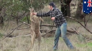 Man fights kangaroo: Aussie dude punches kangaroo in the face after it attacks his dog - TomoNews