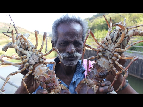 BIG LOBSTERS Prepared by my Daddy / VILLAGE FOOD FACTORY