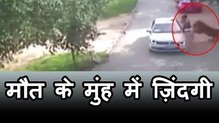 wildlife park में car से बाहर उतरी महिला को उठा ले गया Tiger