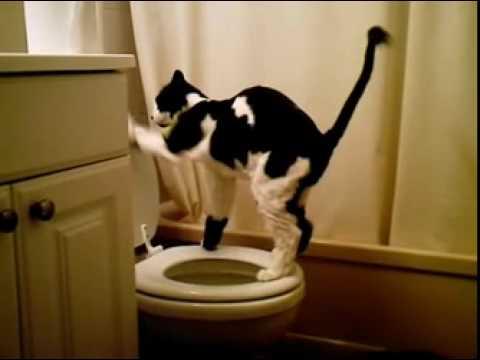 Veja o gato esperto que usa o vaso sanitário
