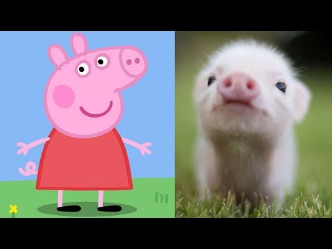 Xxx Mp4 Peppa Pig Characters In Real Life Peppa George Zoe Kylie Danny Emily Candy Suzy Rebecca Freddy 3gp Sex