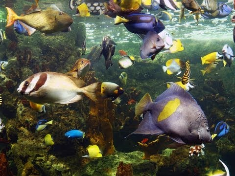 ♥♥ Coral Reef Fish 3 hours