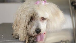 Homeless Dog Gets Makeover That Saves Her Life! - Maggie
