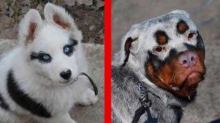 10 Einzigartige Hunde - Mit Unglaublichen Fellmuster!