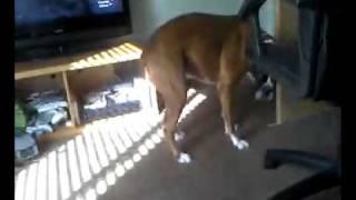 Grandmas dog licks own pussy