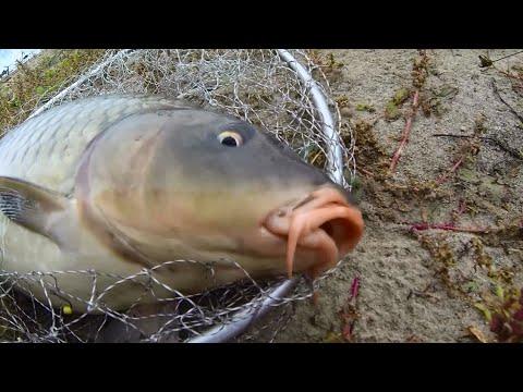рыбалка на карпа и карася с михалычем видео