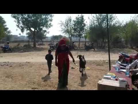 Rajasthan   Neem Ka Thana