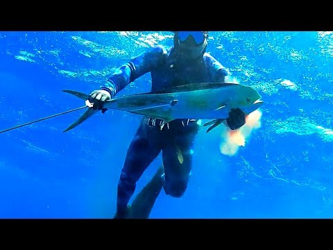 Maui Spearfishing predators and prey