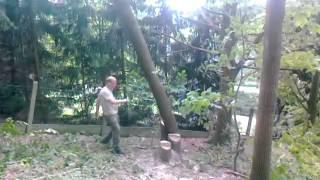 Professioneel bomen vellen doe je zo!