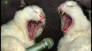 Cat Song, Funny cats present: