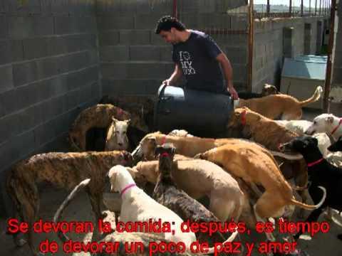 TESTIMONIO Sacrifico perros y gatos para ganarme la vida