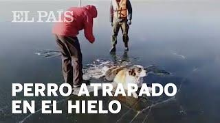 Rescatan a un perro que quedó atrapado en un lago congelado de Rusia