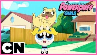 The Powerpuff Girls | Mini Compilation | Cartoon Network