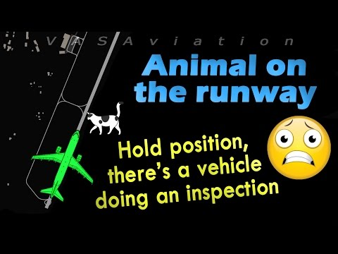 watch [RARE ATC] Unknown ANIMAL forces a Lufthansa A320 to REJECT TAKEOFF!