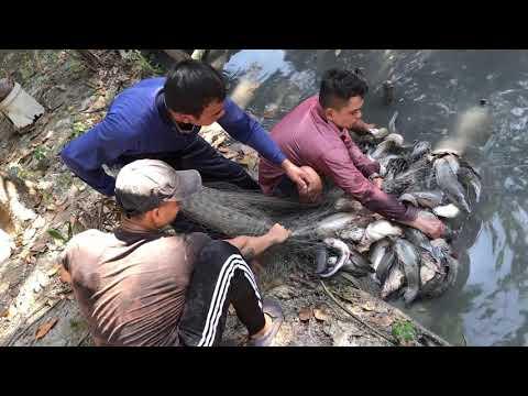 Xxx Mp4 Unbelievable Three Fisherman Defeated By 200 BIG Catfish 3gp Sex